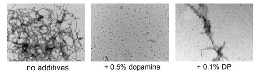 α-Synuclein Fibrillation